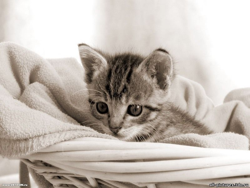 Кошки, коты, фото кошек, фото животных, прикольные фото, скачать картинки, картинки