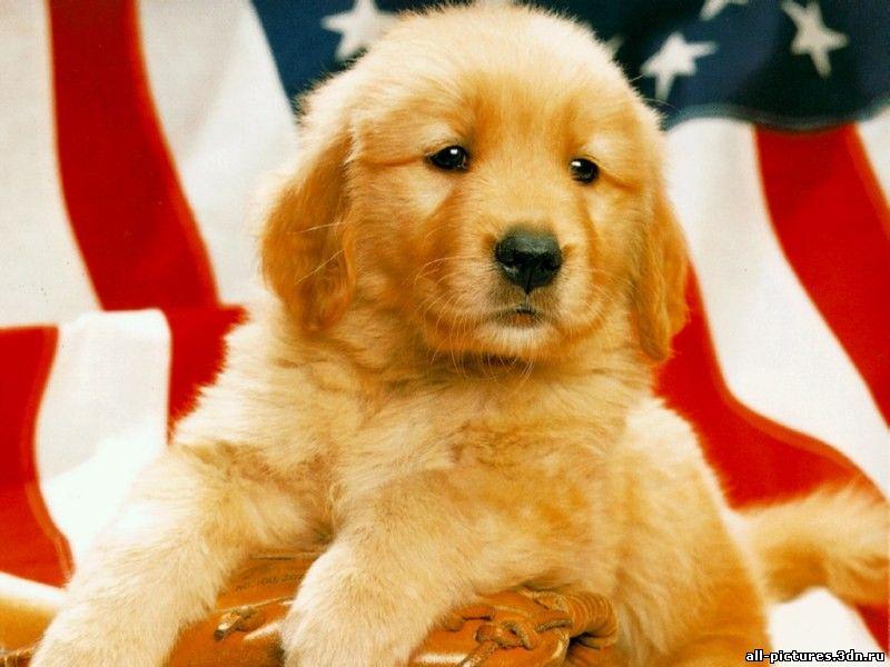 собаки, собаки фото, фото собак, фото животных, животные, скачать картинки, бесплатные картинки